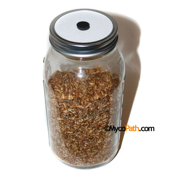 Sterile 1/2 Gallon Rye Grain Jar