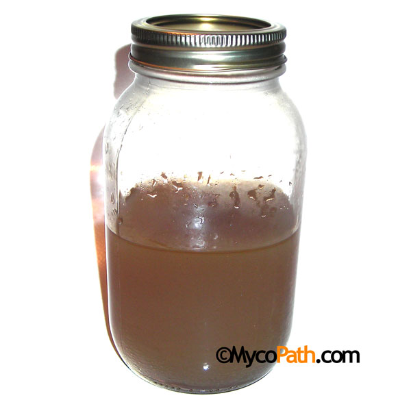 Sterile Malt Extract Agar - 500ml